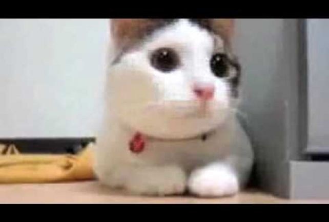 Supercats: Episode 1 —The Funniest Cat Video!